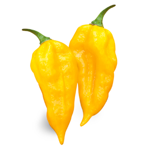 VERY HOT Fatalii giallo