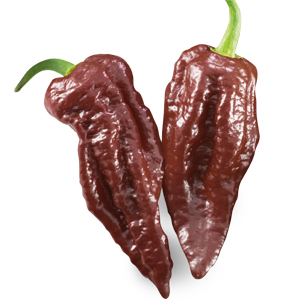 SUPER HOT Naga Morich chocolate