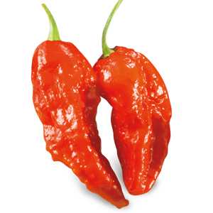 SUPER HOT Big Naga Assam (Bhut Jolokia)