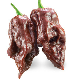 SUPER HOT Trinidad Scorpion Chocolate