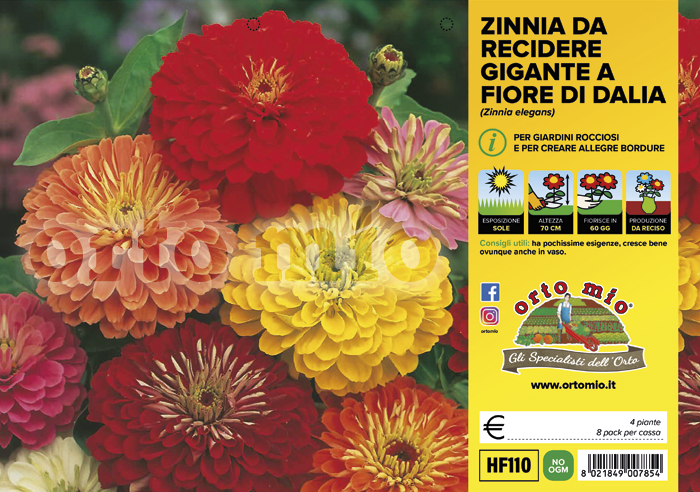 Fiori da recidere Zinnia