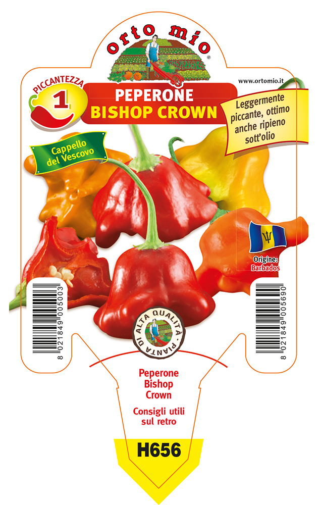 Peperoncino piccante HOT Bishop Crown (Cappello del Vescovo)