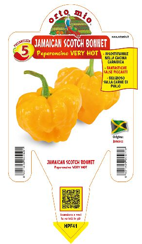 Peperoncino piccante VERY HOT Jamaican Scotch Bonnet