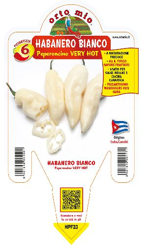VERY HOT Habanero bianco