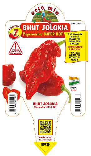 SUPER HOT Bhut Jolokia (Big Naga Assam)