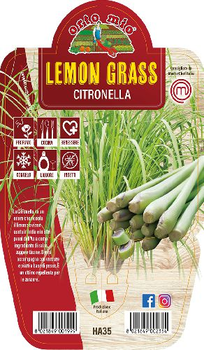 Lemon Grass - Citronella