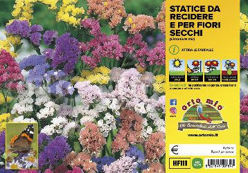 Fiori da recidere Statice