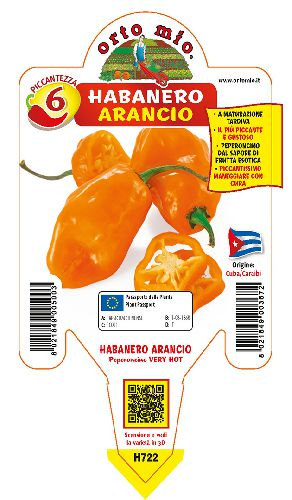 VERY HOT Habanero arancione